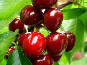 Cavalier cherries